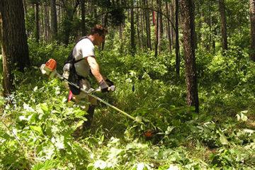 Elhanyagolt területek tisztítása, rendbetétele